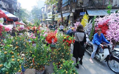 ha noi co 64 cho hoa xuan phuc vu tet nguyen dan ky hoi 2019