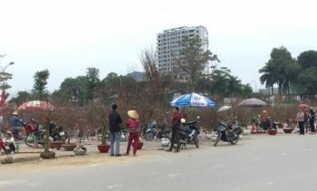 TP Thái Nguyên: Nhộn nhịp chợ hoa, cây cảnh ngày Tết