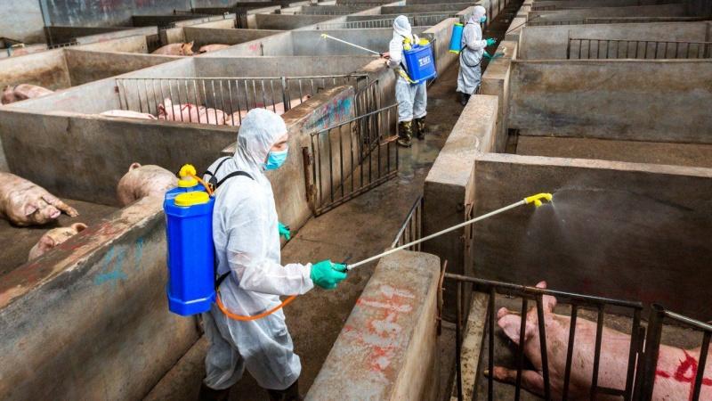 Thái Nguyên: Triển khai nhiều giải pháp phòng, chống bệnh Dịch tả lợn châu Phi