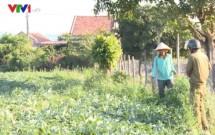 phu yen nong dan thu hoach dua phai lam luat