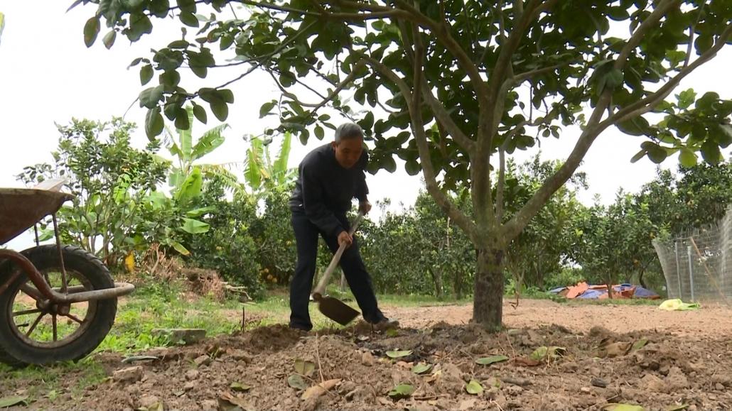 Phát triển bền vững cây ăn quả có múi