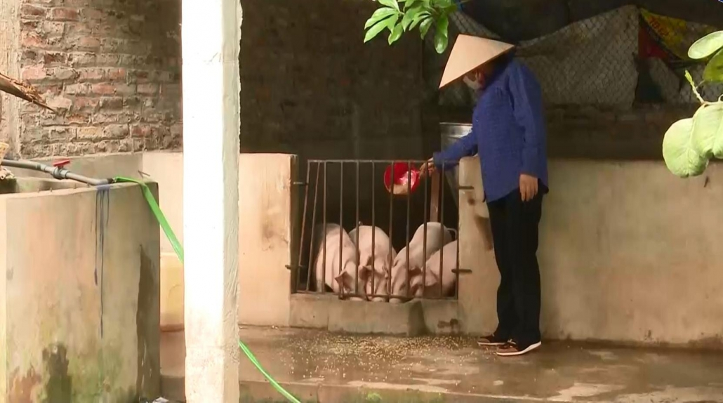 Người chăn nuôi tiếp tục gặp khó khăn