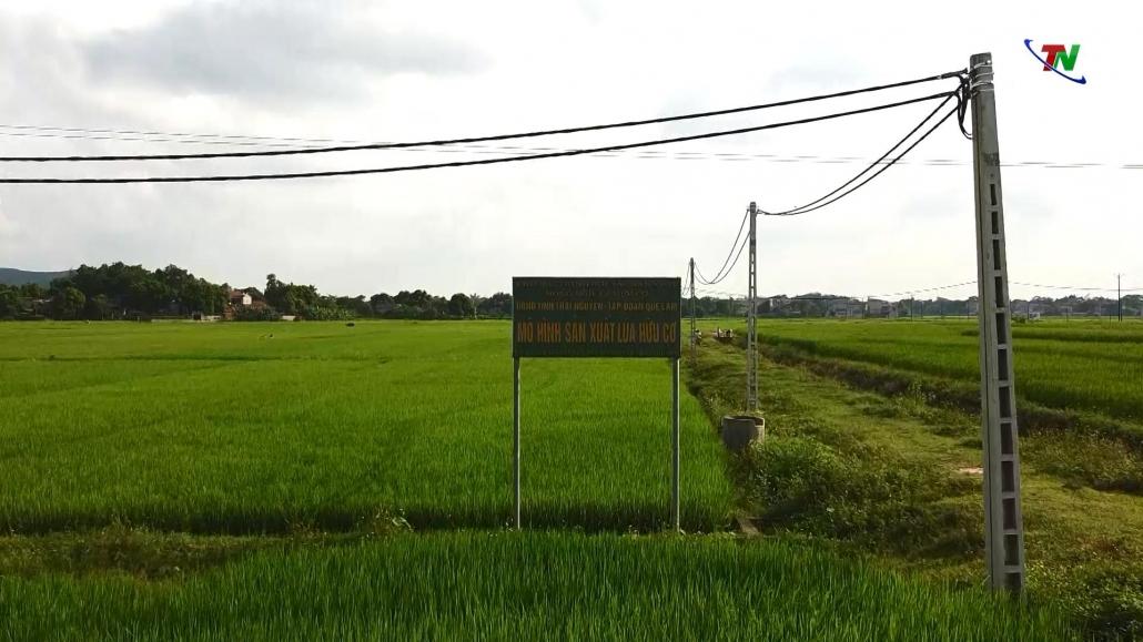 Hiệu quả khi dồn điền đổi thửa, thực hiện cánh đồng lớn - đã psts 27.4