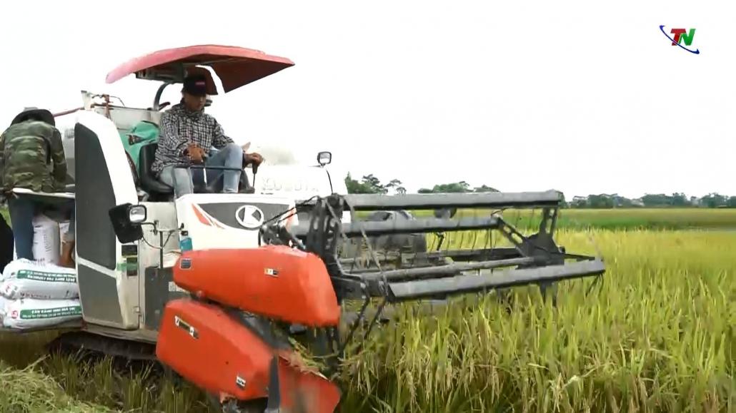 Hiệu quả khi dồn điền đổi thửa, thực hiện cánh đồng lớn