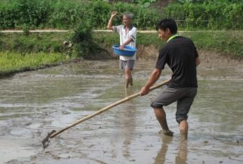 Phú Bình: Gieo mạ chuẩn bị cho vụ Mùa