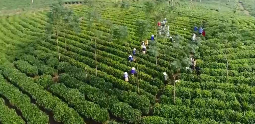 Phát triển làng nghề giúp chè truyền thống Định Hóa khẳng định chất lượng