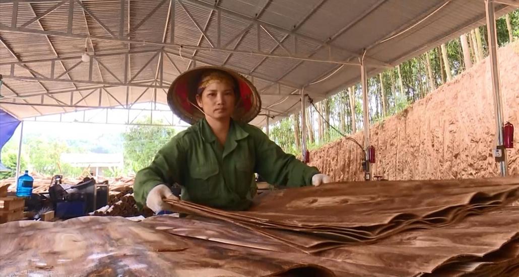 Khó khăn trong sản xuất, chế biến và tiêu thụ sản phẩm gỗ - đã psts 20.7