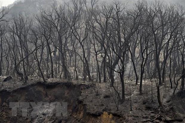 Algeria bắt thêm 25 nghi phạm trong vụ sát hại người chữa cháy rừng