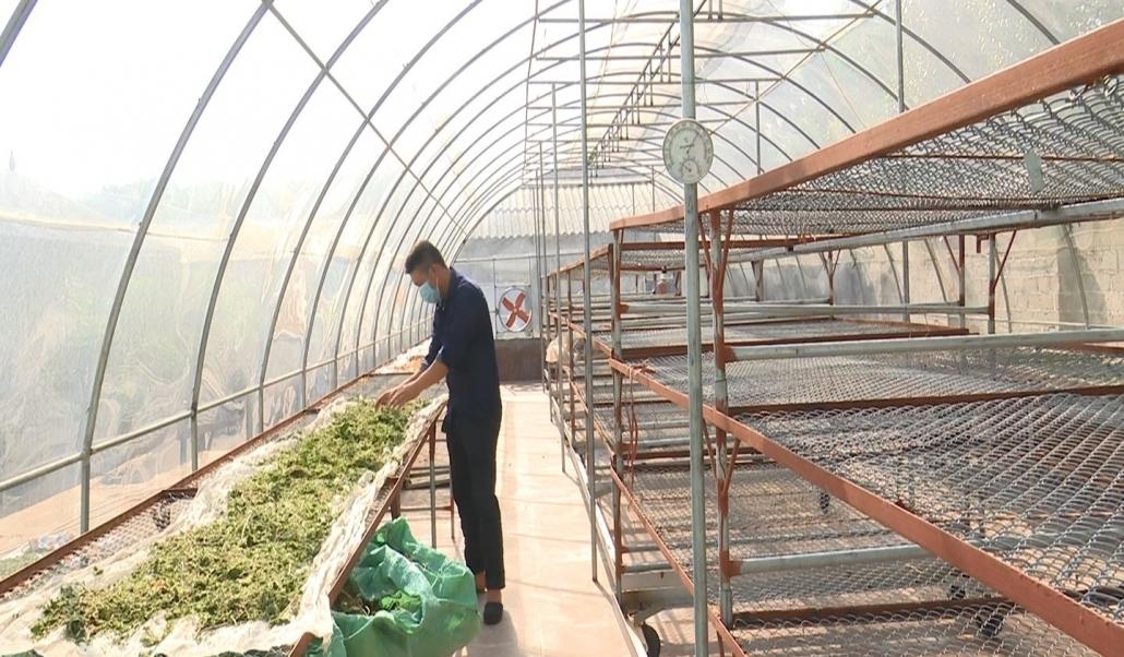 Phát triển cây dược liệu hướng đi mới ở Yên Ninh, Phú Lương
