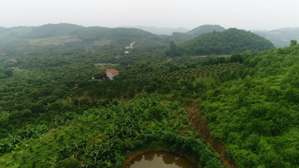 Triển vọng trồng chuối tiêu hồng trên đồng đất Quân Chu