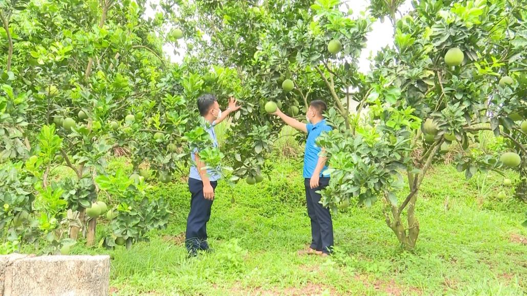 Nâng cao giá trị cây ăn quả chủ lực
