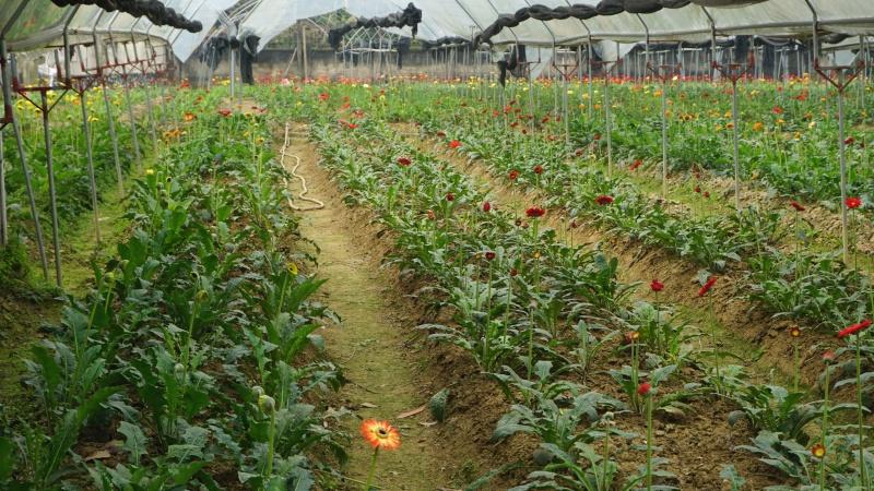lang hoa tuc duyen tat bat chuan bi hoa don tet