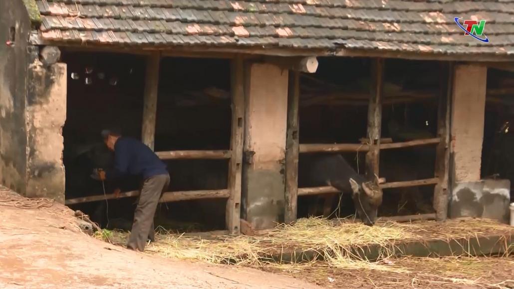 Chủ động phòng, chống rét cho đàn vật nuôi