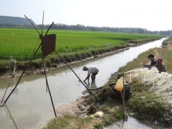 Nông dân Phú Yên xuống đồng sớm chăm sóc lúa