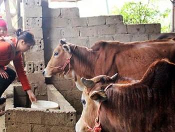 Cao Bằng: Nông dân chấp nhận rời xa cơ nghiệp để sống khỏe hơn
