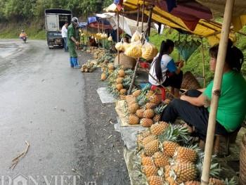 Nông nghiệp, nông dân, nông thôn Điện Biên đang chuyển mình