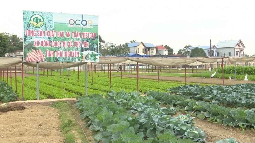 Nâng cao hiệu quả sản xuất từ thay đổi cơ cấu cây trồng
