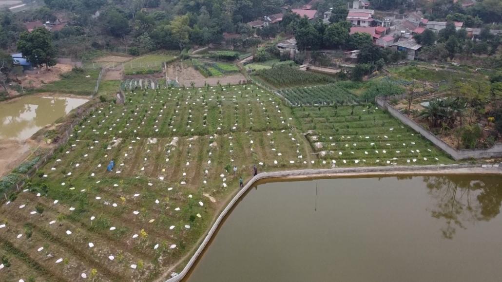 Biến đất lúa kém hiệu quả thành mô hình nông nghiệp cho thu nhập cao