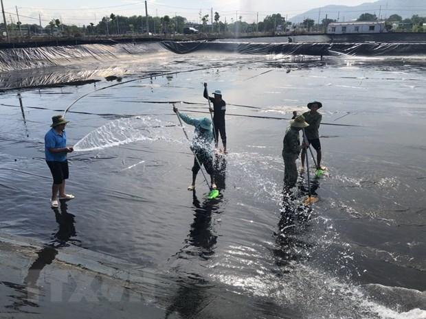 Việt Nam được dự báo là nước sản xuất tôm chủ lực của thế giới