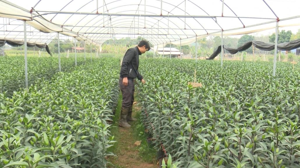 Hiệu quả từ chuyển đổi cơ cấu cây trồng