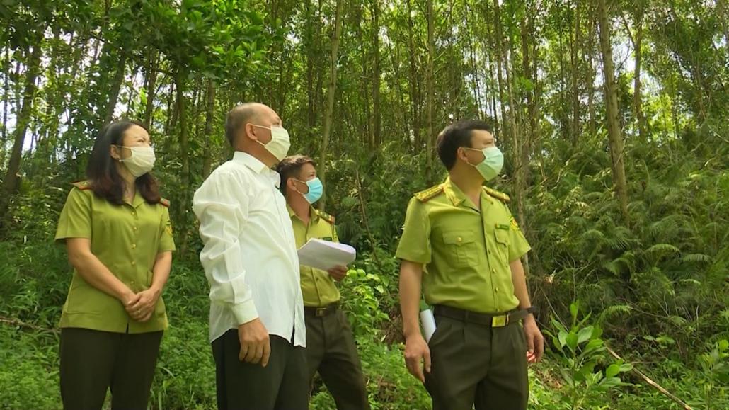 Phát triển lâm nghiệp bền vững, cải thiện sinh kế cho người dân làm nghề rừng
