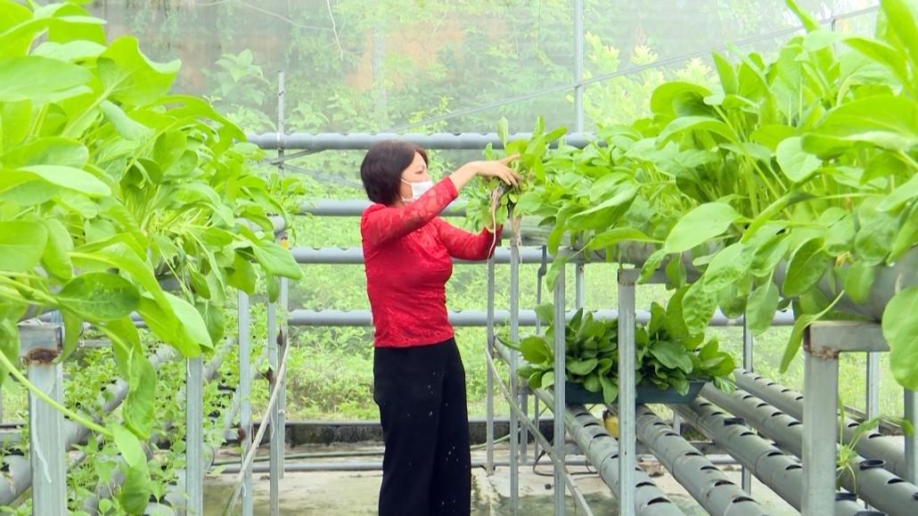 Hiệu quả từ mô hình trồng rau thủy canh của hội viên phụ nữ