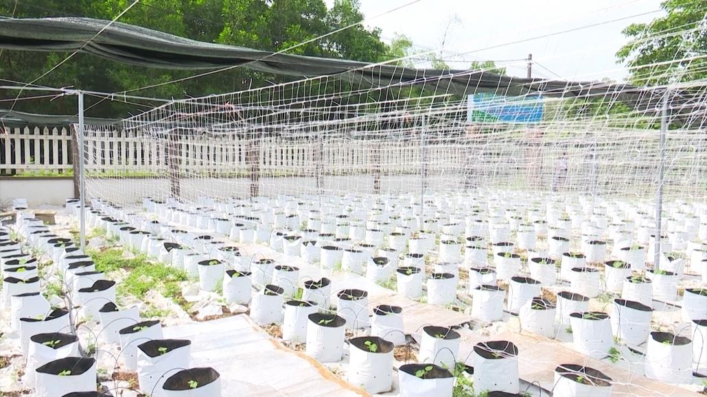 Lời giải cho bài toán thu hẹp diện tích đất sản xuất nông nghiệp