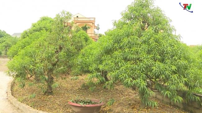 Để làng nghề Hoa Đào Cam Giá phát triển bền vững
