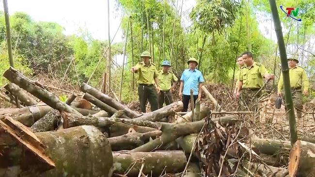 Khai thác gỗ trái phép rừng phòng hộ Định Hóa