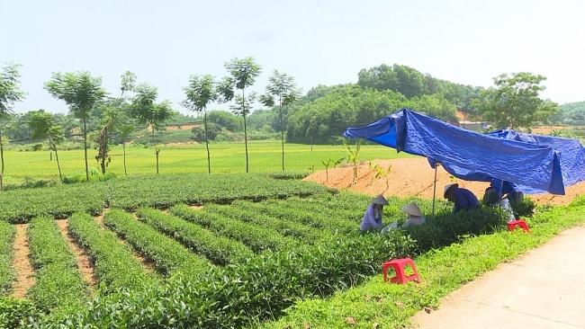 Cần thêm nguồn lực để phát triển làng nghề Phú Lương