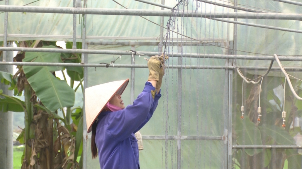 Tiếp tục thay đổi tư duy sản xuất nông nghiệp từ chuyển đổi số