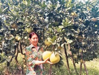 Người thuần hóa 12ha đất khô cằn thành trang trại lãi trăm triệu
