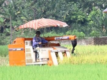 Thành phố Sông Công: Sản lượng cây lương thực đạt trên 24.000 tấn
