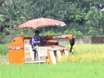 thanh pho song cong san luong cay luong thuc dat tren 24000 tan
