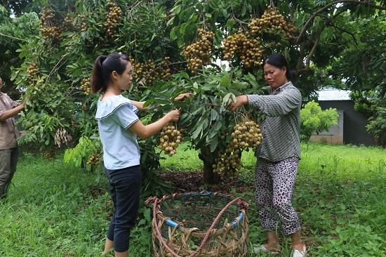 Bộ mặt NTM Sơn La khởi sắc: Sông Mã bứt phá xây dựng nông thôn mới