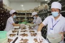 600 luong y di lam giup viec vi khong duoc cap chung nhan