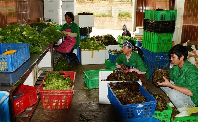 Lâm Đồng mở rộng mô hình trung tâm sau thu hoạch