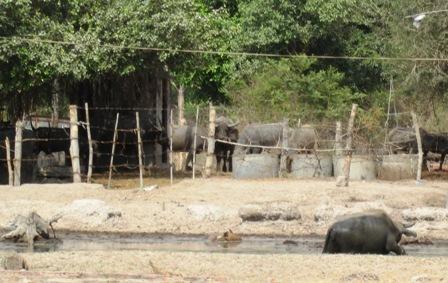 tphcm cho phep cong vien safari mo nha hang khach san