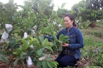 Lên mạng học hỏi, bà mẹ trẻ 32 tuổi giỏi làm vườn giữa đất cằn