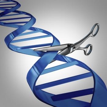 Đột phá: Chữa khỏi hoàn toàn bệnh AIDS bằng chỉnh sửa gen