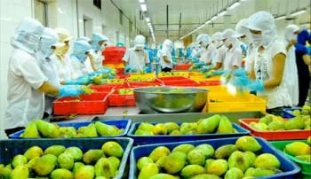 Xuất khẩu rau, quả cán mốc 1 tỷ USD
