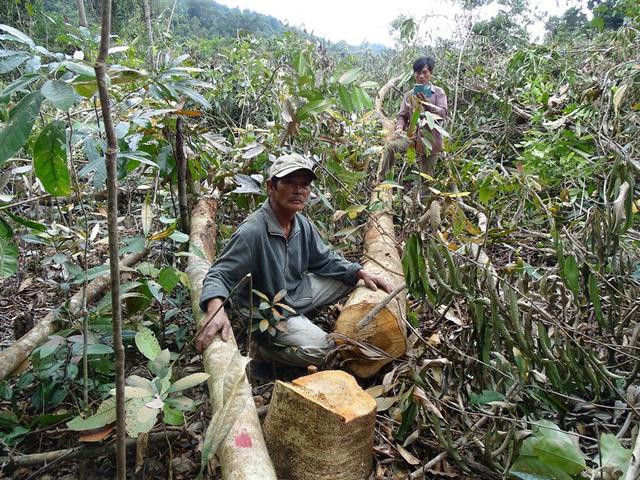 Phú Yên: 19 tập thể, 57 cá nhân bị kỷ luật vì liên quan đến hàng loạt vụ phá rừng