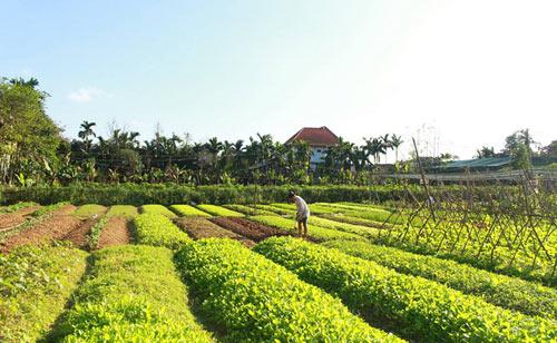 TP. Huế: Trồng rau hữu cơ, nhà nông, người tiêu dùng đều khỏe