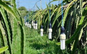 Tiết kiệm năng lượng tự nguyện khó đạt hiệu quả
