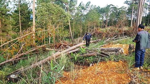 Đình chỉ công tác Phó Chủ tịch xã vì để 4ha rừng bị chặt trụi