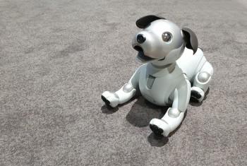 Chú cho robot AIBO 'hồi sinh' hút khách xem tại triển lãm IFA 2018