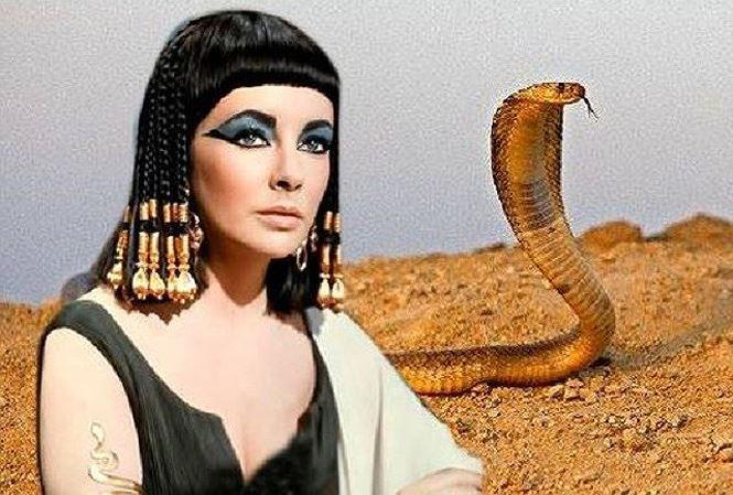bi an ve loai ran cua nu hoang cleopatra