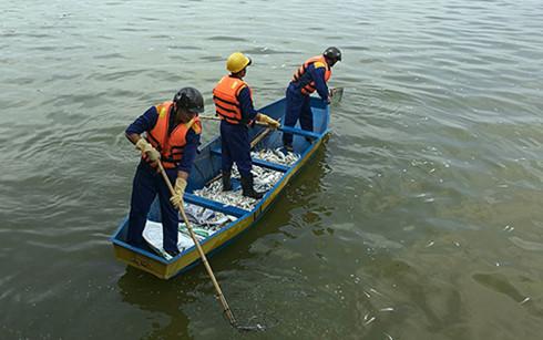 Làm xét nghiệm tìm rõ nguyên nhân cá chết trắng Hồ Tây