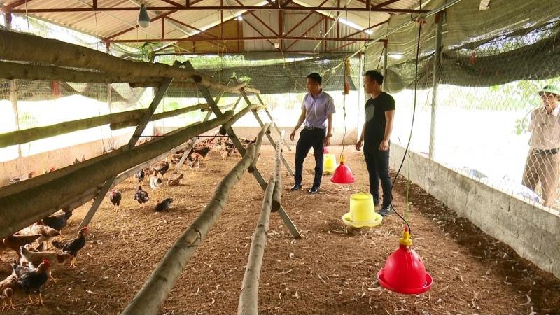 Tập huấn kỹ thuật chăn nuôi gia súc, gia cầm