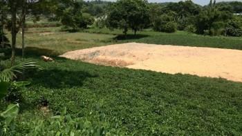 Cần tăng cường công tác quản lý đất đai tại xã Cổ Lũng, huyện Phú Lương
